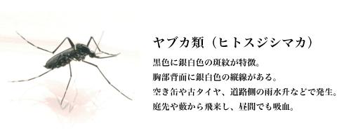 ヤブカ類(ヒトスジシマカ)